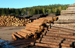 Sawmills and forestry