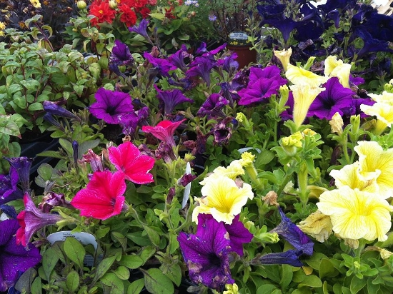 BEDDING PLANTS AVAILABLE